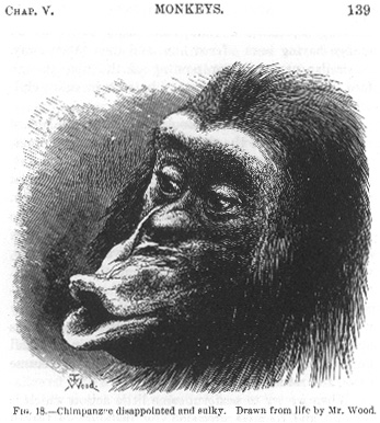 an analysis of the skeleton key the monkey in the mirror and tattersall Reader allison gamble has kindly volunteered to rectify this situation with a three-pound monkey brain may hold keys to understanding known as 'mirror.