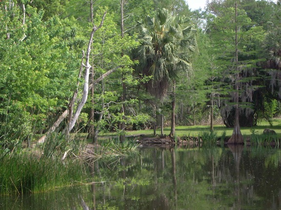 Riparian Woodland Beside Aliceu0027s Pond In The Gardenu0027s Heart.