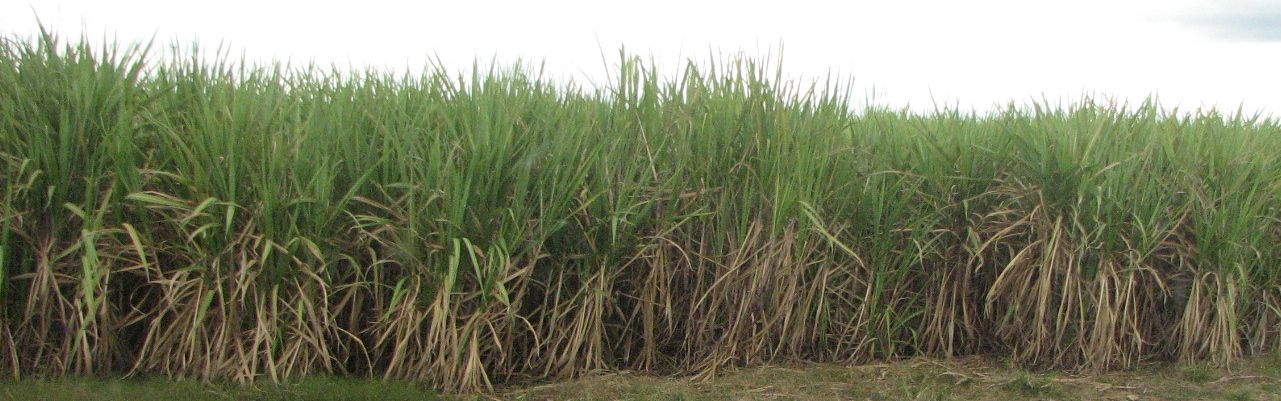 the antilles fragments of epic memory by The antilles: fragments of epic memory felicity is a village in trinidad on the edge of the caroni plain, the wide central plain that still grows sugar and to which.