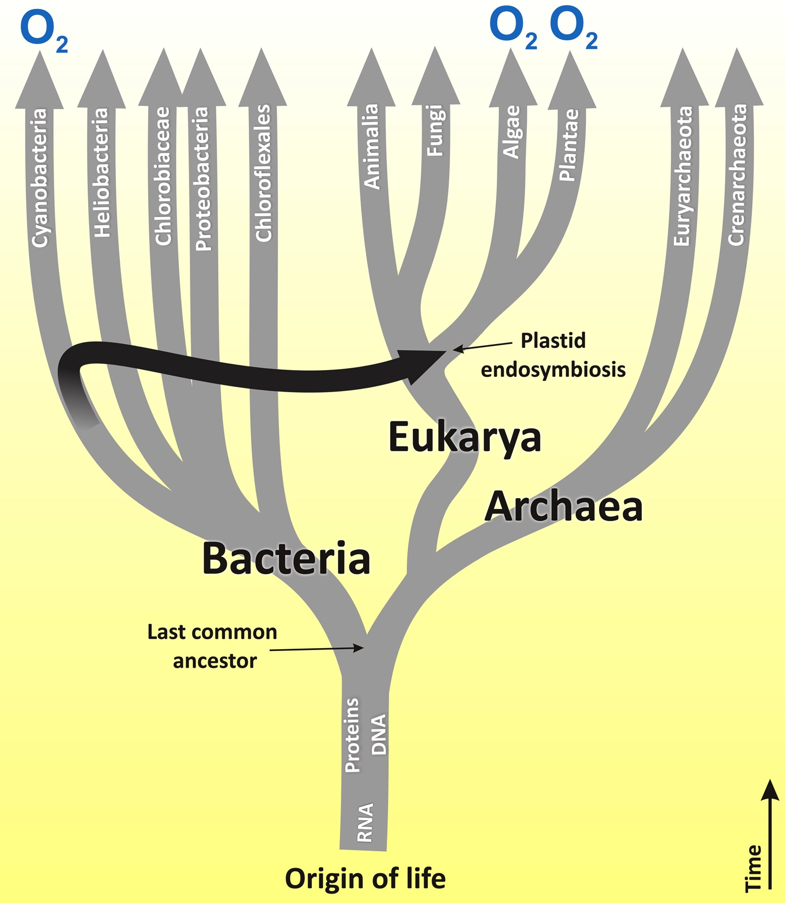 origin of eukaryotes bio 108