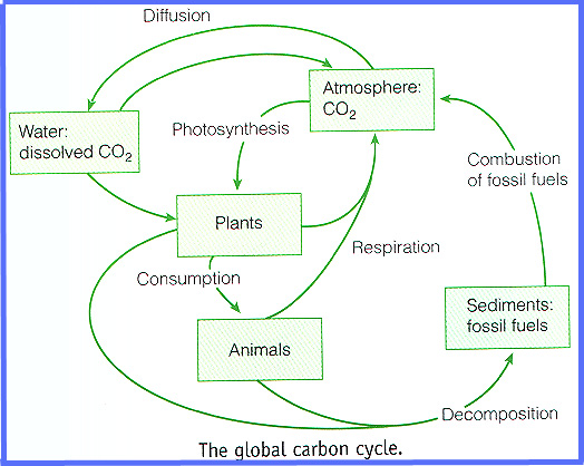 Environments origins niches and adaptive capacities as ecological carbon cycle mover the building blocks of life from the air to the soil to the oceans and to the rocks in a never ending but very variable cycle of ccuart Choice Image