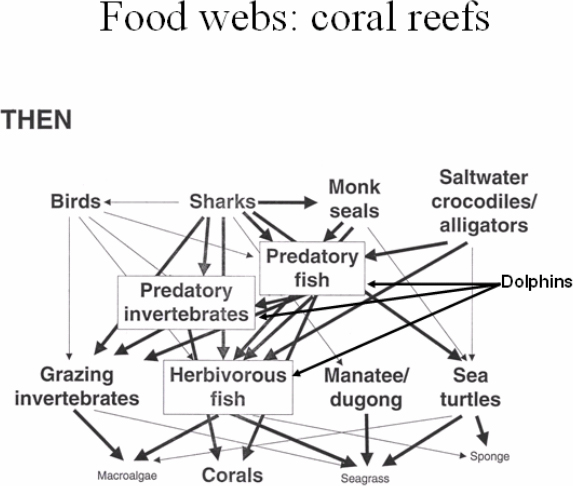 Tropical Coral Reef Food Chain